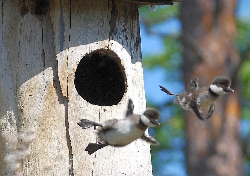 baby birds courageously leaving birdhouse and risking negative feedback